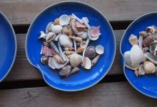 貝殻でおままごとをする娘 #こどもの遊び
